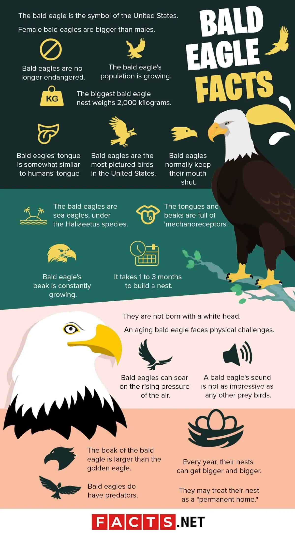 Bald Eagle Size To Human : eagle, human, Majestic, Eagle, Facts, Facts.net