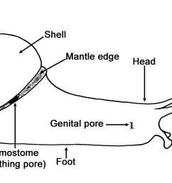 snail habitat diagrams wiring diagrams wni snail anatomy facts about snails snail habitat diagrams [ 4407 x 1981 Pixel ]