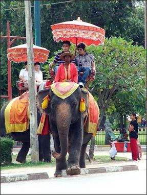 Asian Elephants In Thailand Work Unemployment Welfare
