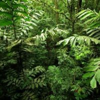 Rainforest Facts For Kids | Top 27 Facts