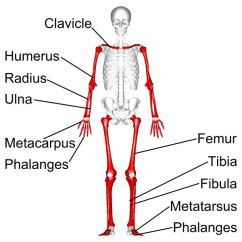 Kids Skeletal System Diagram Air Horn Wiring Without Relay For Facts