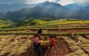 Lifestyle, Indonesian Lifestyle, indonesia lifestyle, rural