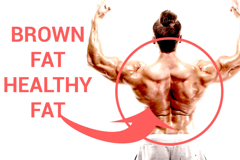 What Is Brown Fat? How is brown fat different from other ...