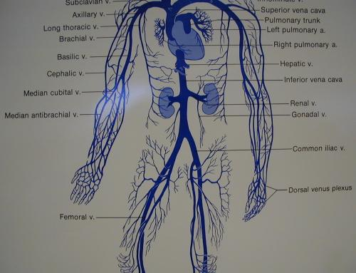 small resolution of diagram of artery throughout body