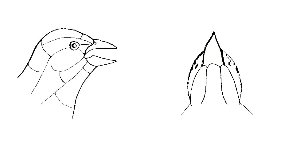 Avian Molting and Aging Chart