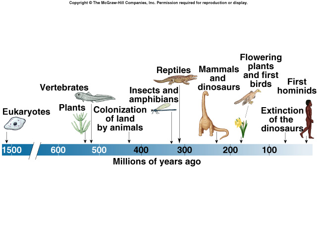 Introduction to Darwinian Evolution