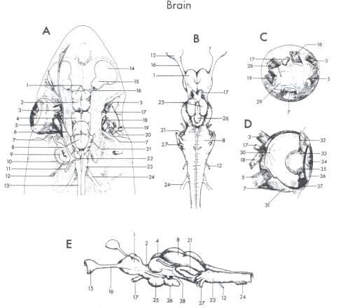 Fish Internal Diagram, Fish, Free Engine Image For User