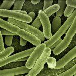 infezioni-catetere-escherichia-coli