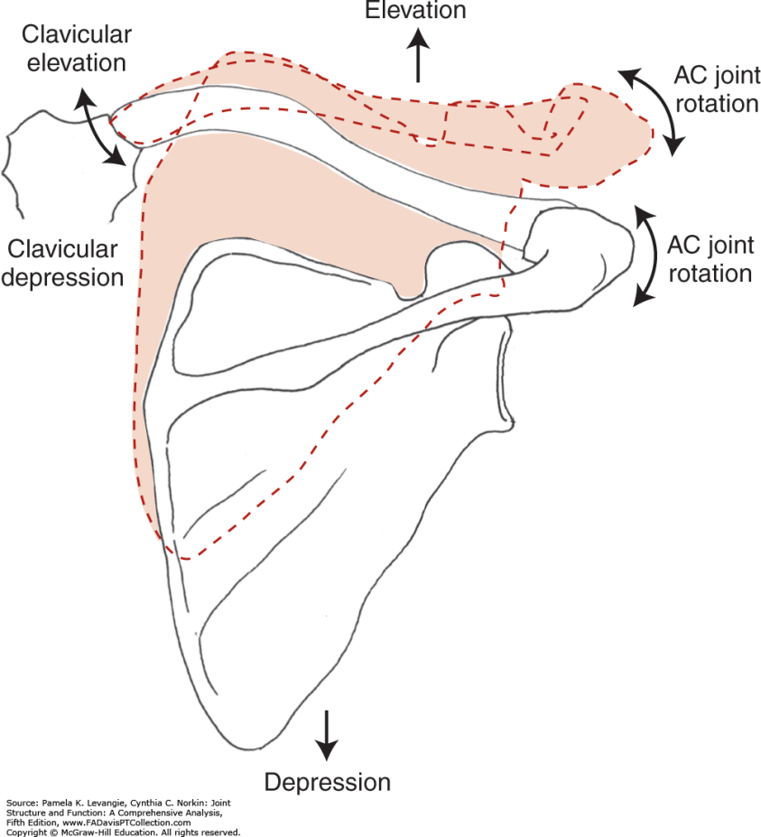 Elevation Definition Anatomy