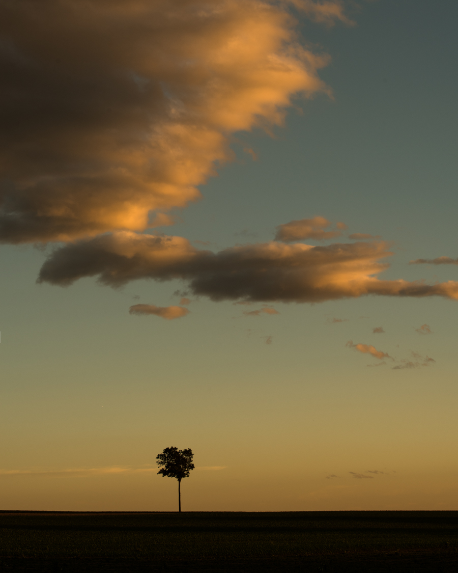 a lone tree in an open field with cloud above at sunset