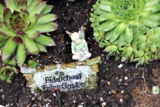 Fairy Gardening, Container Gardening, Urban Gardening