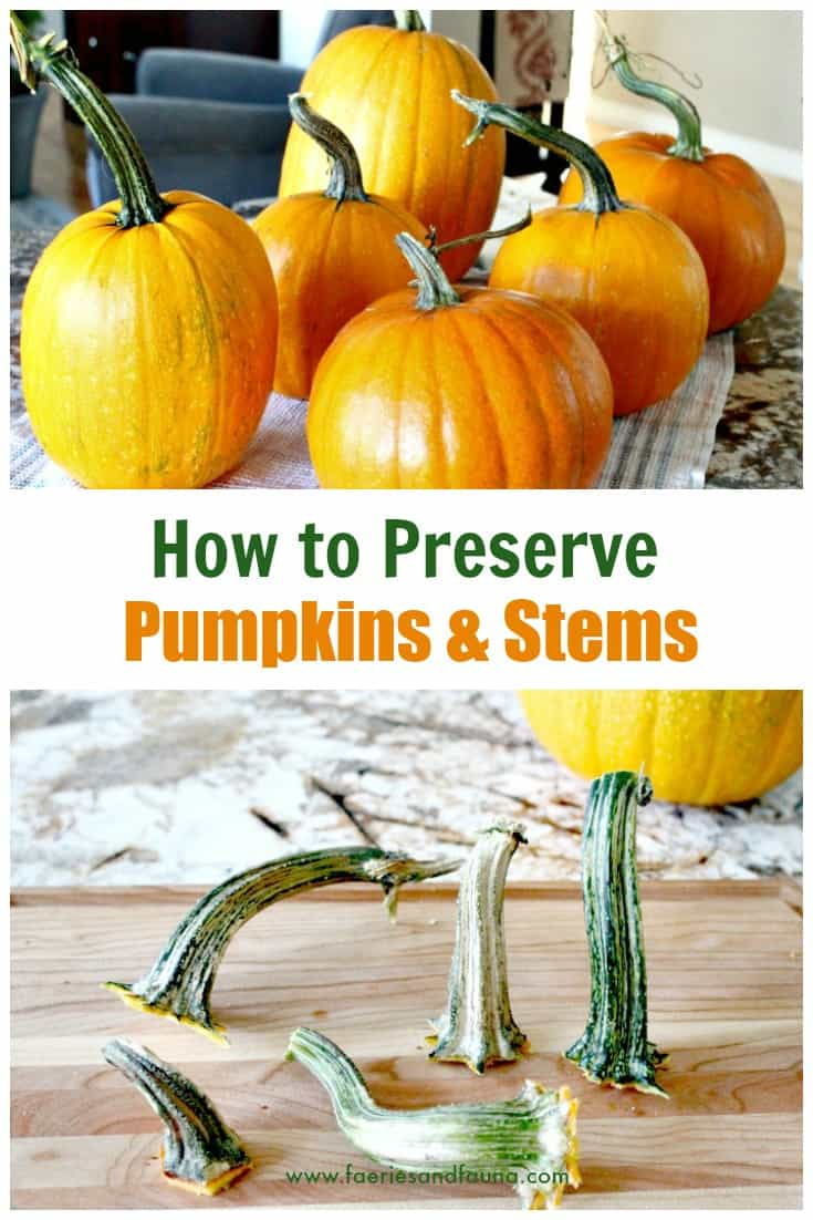 How to preserve pumpkin for fall recipes, and pumpkin stems for fall decorating.
