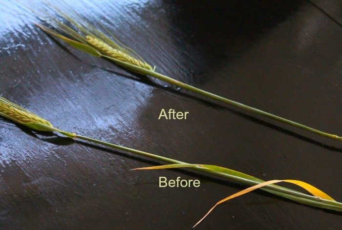 Cleaning wheat stalk stems for DIY fall decorating