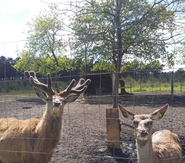 Le Parc Animalia à Naujac-sur-Mer