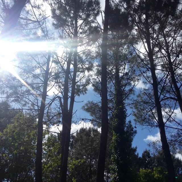 Les vacances sous les pins
