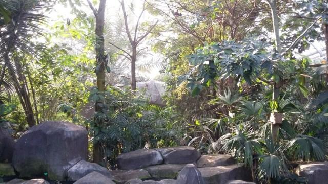 Serre tropicale du zoo de Vincennes