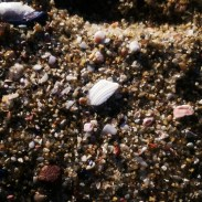 Shards of shells and rocks on the beach.