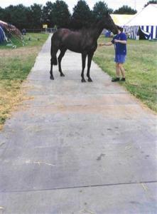 Pferd auf Event-Fahrplatten