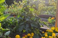 Gartenimpressionen von Juli 2015