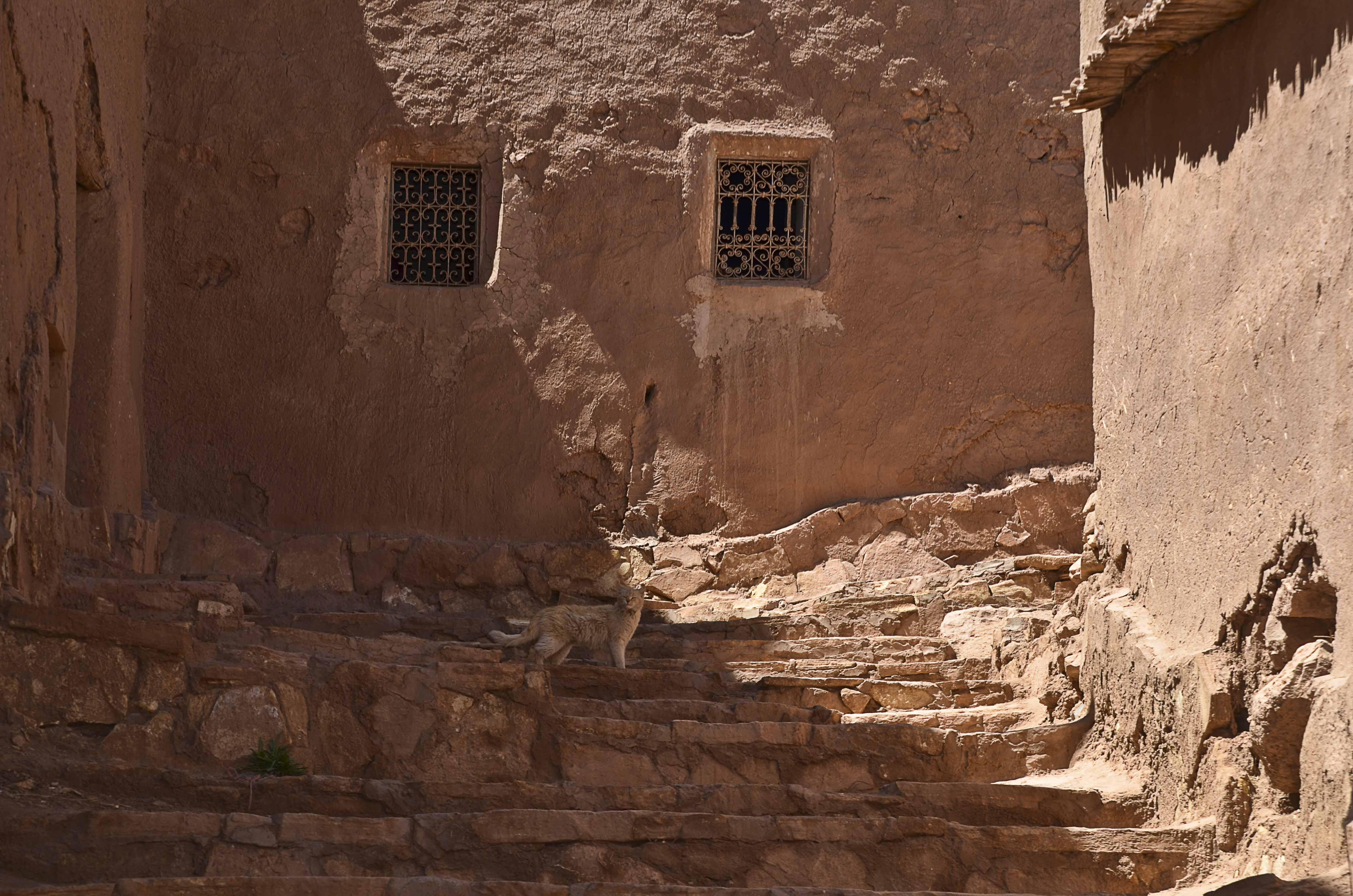 Moroccan Cats II