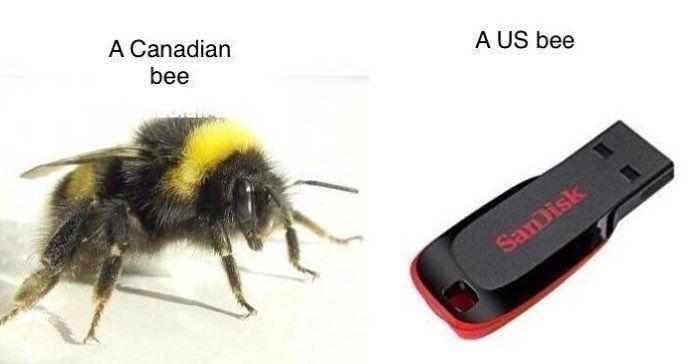 USB_bee