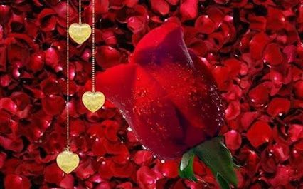 Single wet red rose on rose petals with gold hearts