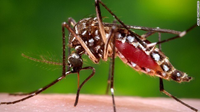 The Problem Is NOT Mosquitos But Viruses