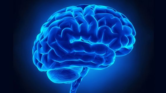 The Brain and Trauma