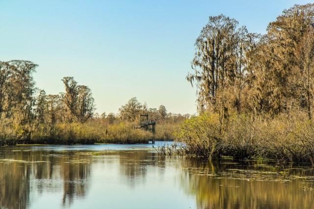 floridaswamp.jpg