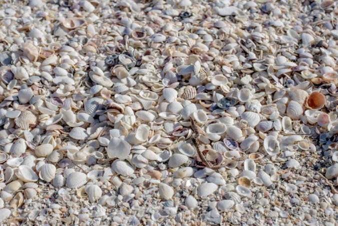 seashells detail