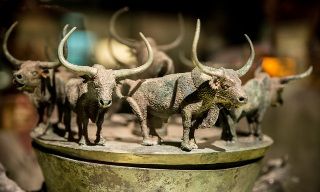 bulls on jar (1 of 1)