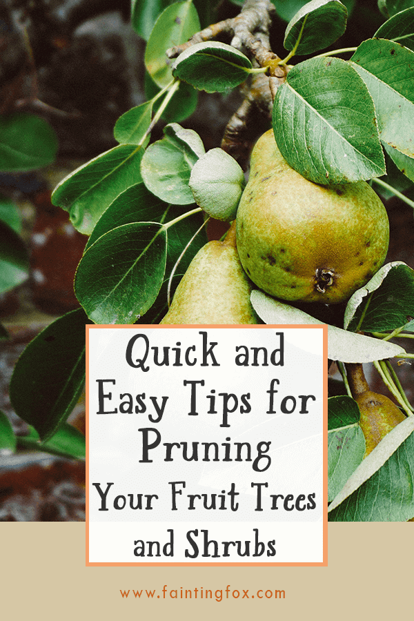 Pruning Fruit Trees and Shrubs