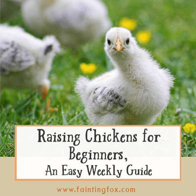 Raising Chickens for Beginners, An Easy Weekly Guide