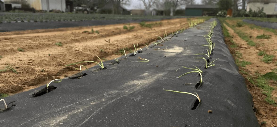 20 ways kill weeds