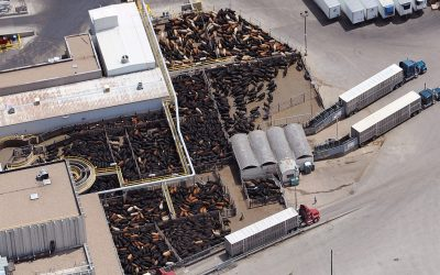 VIDEO: Lee Reichmuth talks about the need to move through extensive backlog of cattle