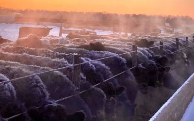 VIDEO: Tim Pazour discusses current financial losses cattle producers are experiencing
