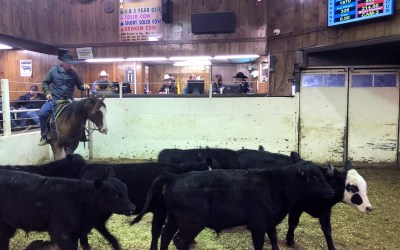 VIDEO: Justin Tupper speaks to the need for unity in the cattle industry
