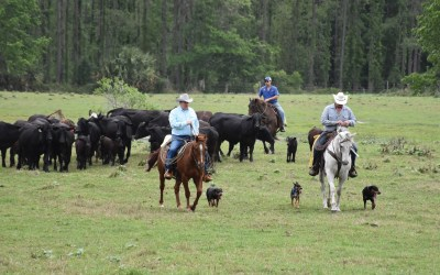 AUDIO: NCBA President Marty Smith explains how lack of packing capacity leads to disaster