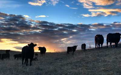VIDEO: Trey Wasserburger discusses how packer concentration has led to the inability to kill cattle
