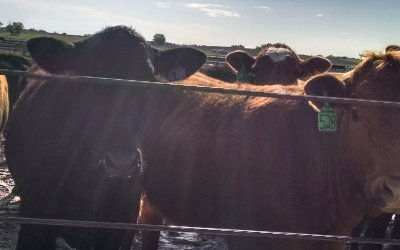 AUDIO: Cattle Feeder Troy Stowater explains NCBA's voluntary framework to achieve robust price discovery
