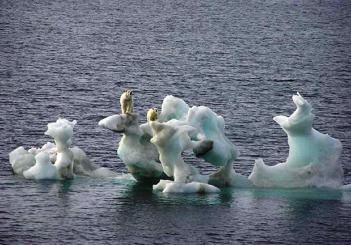 Polar bears on melting iceberg