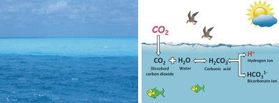 Fig.: L-R: Now the ocean suffers from rising level of CO2. The underlying chemical process behind ocean acidification