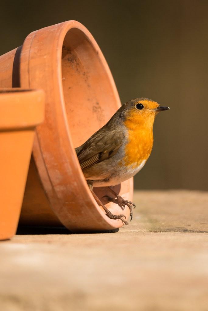 bird-table-photography_01