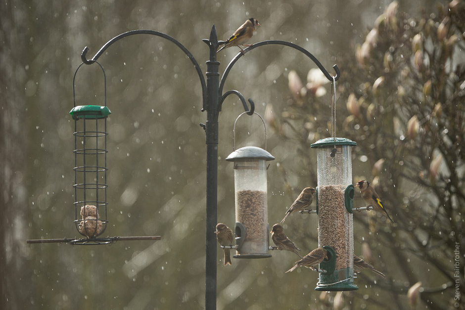 2017-rspb-garden-bird-watch-02