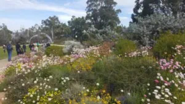 Wildflowers at King Park, WA
