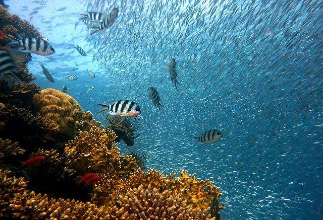 Rôle des coraux des fonds marins