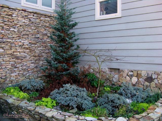 winter interest-shrubs