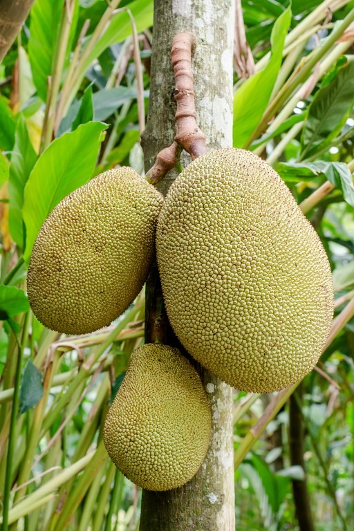 Jackfruit - I gave up meat for 7 weeks...here' s what I learned!     Fairly Southern