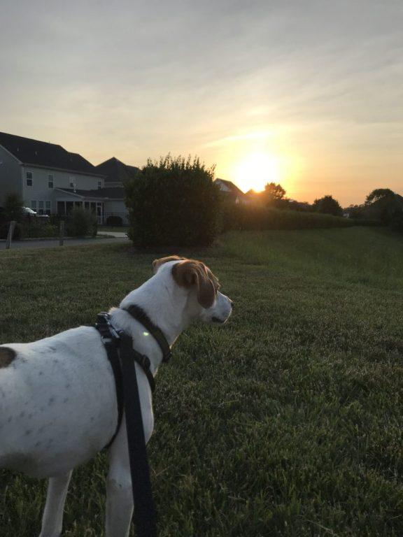 Walking dog at sunset  |  Fairly Southern