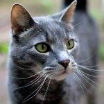 Pet Portrait of Thomas